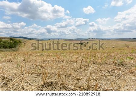 Tuscany Cornfield - stock photo