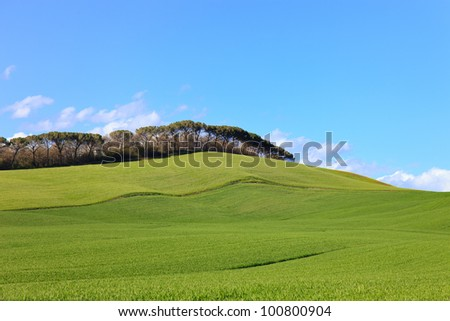 Tuscany, Crete Senesi country landscape, Italy, Europe. Rolling Hills, green undulating fields, pine trees in a row, blue sky partially cloudy. - stock photo