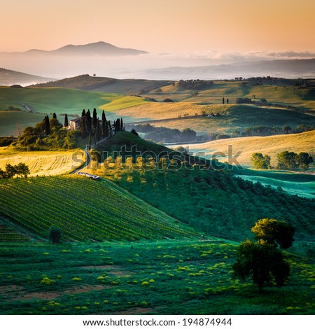 Tuscany, cypress trees and landscape in Italy - stock photo