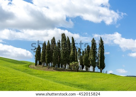 TUSCANY, ITALY - APRIL 14, 2016: Famous group of cypresses in vibrant colors of sunny day, Tuscany, Italy - stock photo