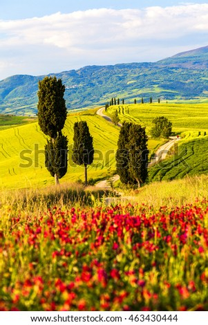 Tuscany, Landscape panorama, Gladiator road with cypress trees,Toscana - Italy