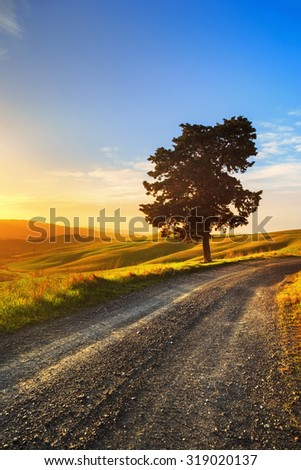 Tuscany, lonely tree and white rural road on sunset. Volterra, Italy, Europe.