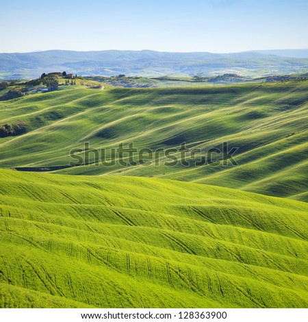 Tuscany, rolling hills on sunset. Crete Senesi rural landscape. Green fields and a farm with trees on background. - stock photo