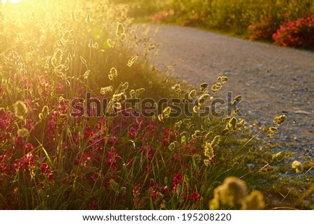 Tuscany summer roads - stock photo