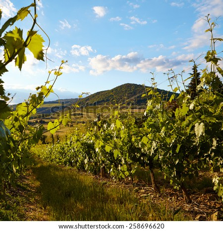 Tuscany vineyards in fall - stock photo