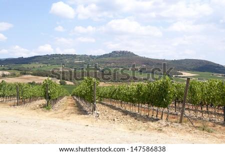 Tuscany vineyards, Italy. - stock photo