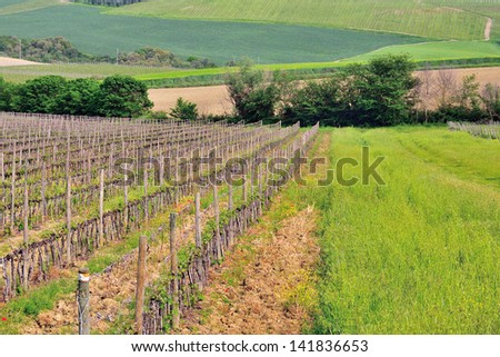 Tuscany vineyards with the hills on the background