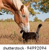 Tuxedo cat and a big horse - best friends - stock photo