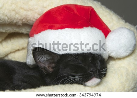 tuxedo cat kitten sleeping, portrait up close wearing a miniature Santa Hat. - stock photo