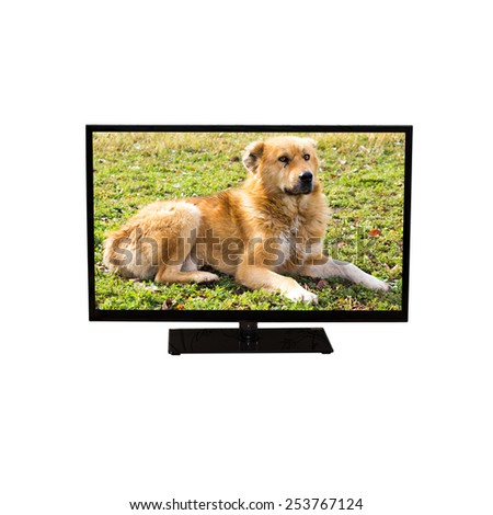 TV or computer monitor shows a beautiful redhead dog (isolated on white) - stock photo