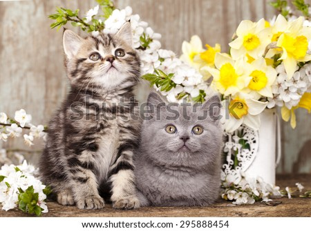tvo kittens sitting in spring flowers - stock photo