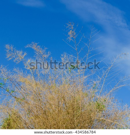 twig  bamboo and blue sky