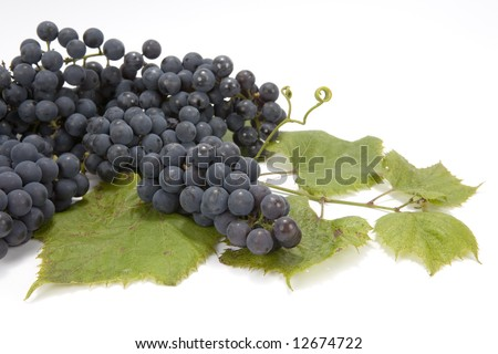 Twig of Common Grape Vine (Vitis vinifera) with ripe fruits and leaves on white background