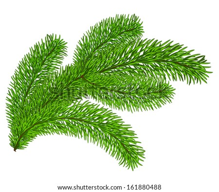 Twig of evergreen fir on white.