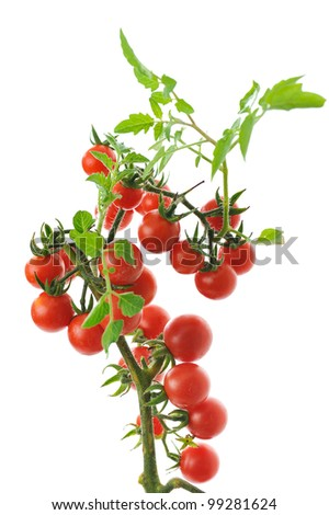 twig of fresh cherry tomato isolated on white background - stock photo