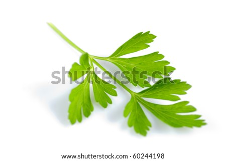 Twig of green parsley isolated on white close up. Selective focus