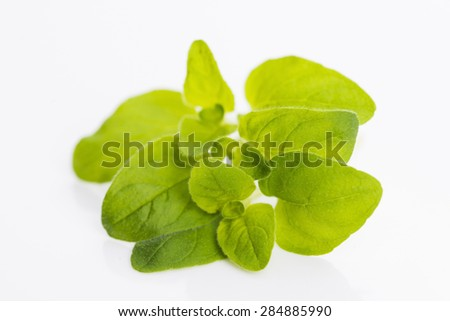 Twig of oregano on a white background - stock photo