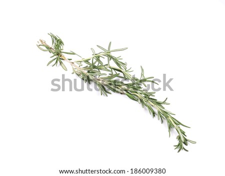 Twig of rosemary. Isolated on a white background. - stock photo