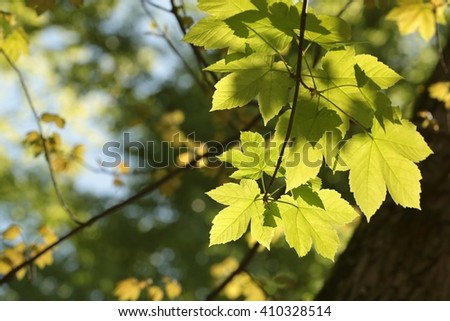Twig of spring leaves in a forest. - stock photo