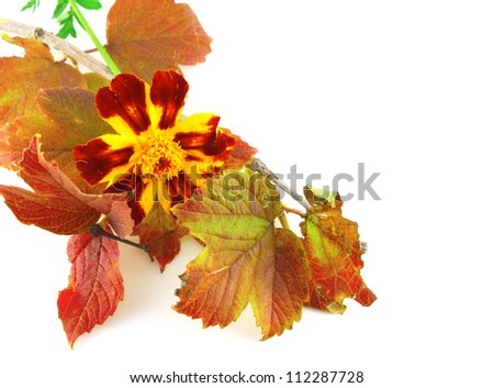 Twig with autumn leaves and beautiful flower