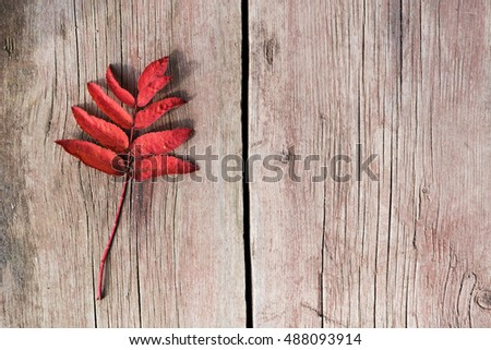 Twig with red leaves on old wood