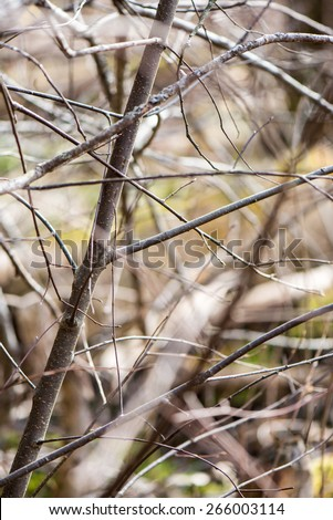 Twig with spring buds on dark background - stock photo