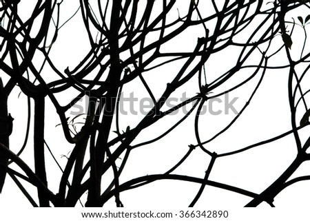 Twigs and branches in high contrast on white background.