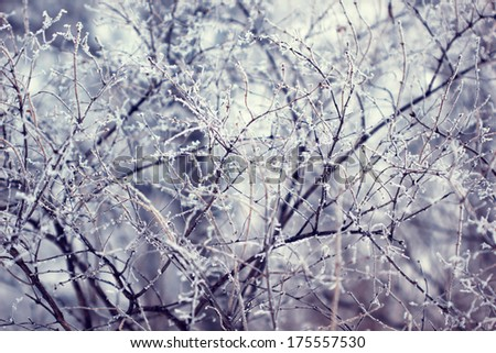 twigs covered with frost - stock photo