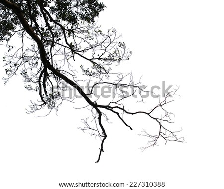 Twigs isolated on white background - stock photo