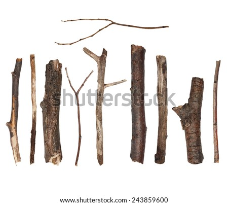 Twigs isolated on white background, dry linden tree - stock photo