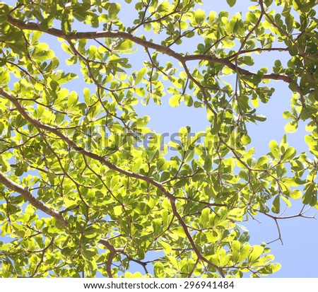 Twigs leaves trees take up the sky - stock photo