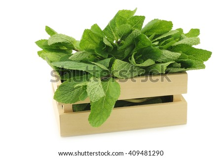 twigs of fresh mint in a wooden box on a white background - stock photo