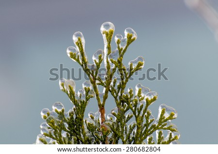 Twigs of tree encased in ice after a freezing rain storm - stock photo