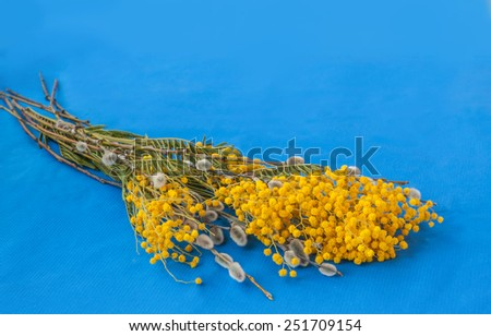 Twigs of willow and mimosa flowers bunch on blue background  - stock photo