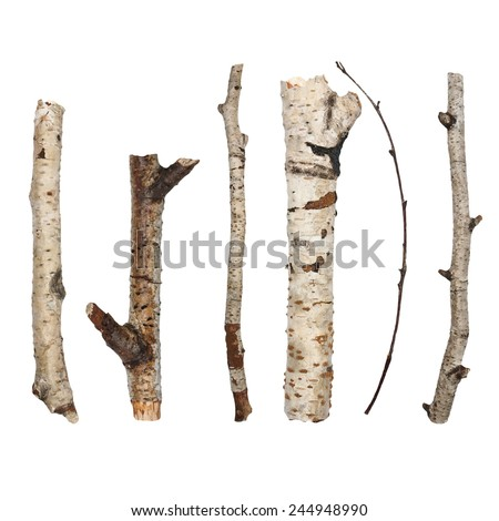Twigs, set macro dry branches birch isolated on white background - stock photo