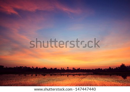 Twilight sunset background over green rice farm landscape