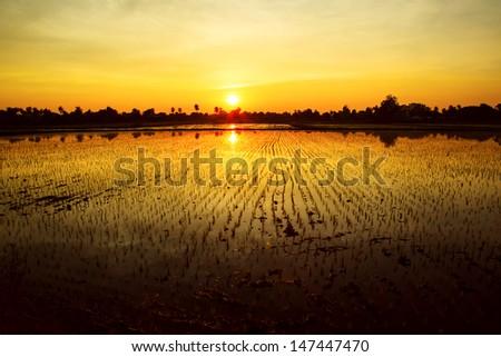 Twilight sunset background over green rice farm landscape - stock photo