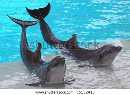 Twin Dolphins - stock photo