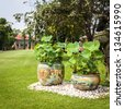 Twin lotus pot decorated on green field in day light - stock photo