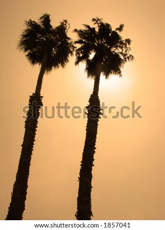 Twin Palm Trees Against the Sun - stock photo