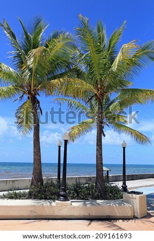 Twin Palm Trees Frame A Pleasant View Of The Ocean In Key West, Florida.