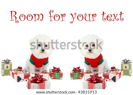 "twin pure breed ""Bichon Frise"" dogs with red bows, and wrapped gifts ""isolated on white"" with ""room for your text"" - stock photo"