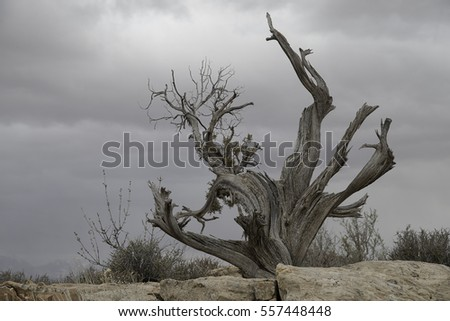 Twisted juniper tree found in Arches National Park, Utah
