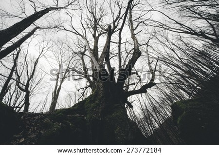 twisted old tree in spooky forest dramatic view - stock photo