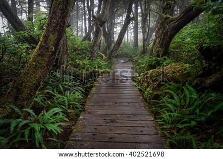 Twisted Trees on the Botanical Beach Trail near Port Renfrew, BC - stock photo