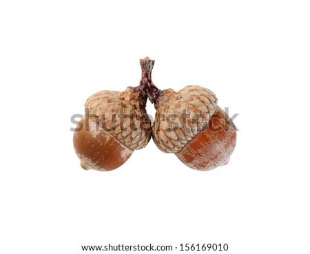 Two  acorns isolated on white - stock photo