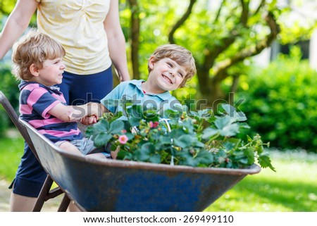 Two active blond kid boys having fun in a wheelbarrow pushing by mother  in domestic garden, on warm sunny day. Active outdoors games for kids in summer.