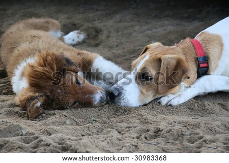 Two adorable dogs in love - stock photo