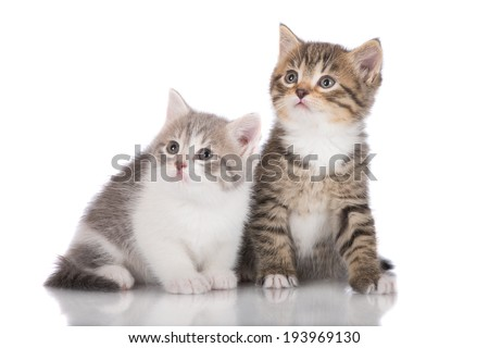two adorable kittens - stock photo