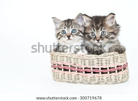 Two adorable kittens sitting in a basket together on a white background with copy space.